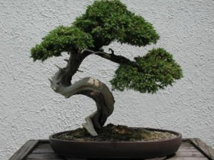 Bonsai trees are beautiful because they are flawed.